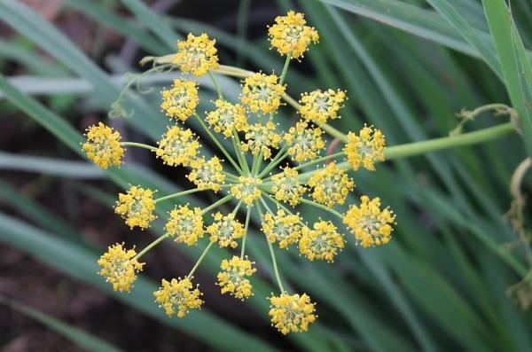 Inflorescencia: qué es, tipos y partes - Tipos de inflorescencia