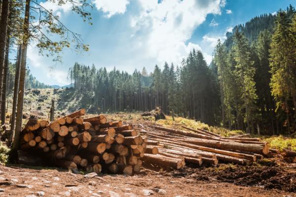 Tipos de impactos ambientales - Impacto reversible o irreversible
