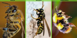 Diferencia entre abeja, avispa y abejorro