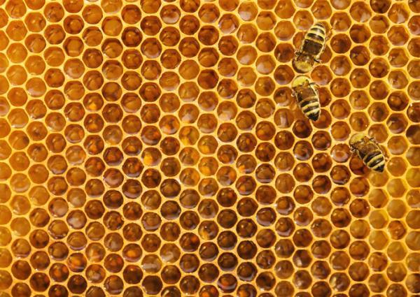 Cómo hacen la miel las abejas - Cómo producen la miel las abejas