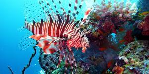 Especies invasoras: qué son, ejemplos y consecuencias