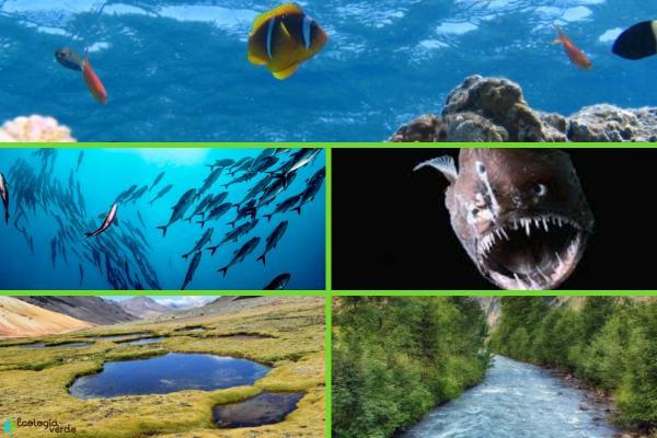 Hábitat acuático: qué es, características, tipos y ejemplos - Ejemplos de hábitat acuático