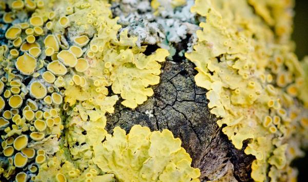 Sucesión ecológica: definición, etapas y ejemplos - Mecanismos de la sucesión ecológica
