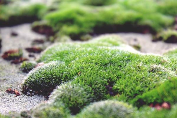 Sucesión ecológica: definición, etapas y ejemplos - Sucesión primaria