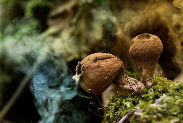 Qué son las esporas - Qué son las esporas y para qué sirven