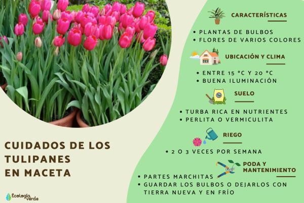 Resultado de imagen de tulipanes en maceta