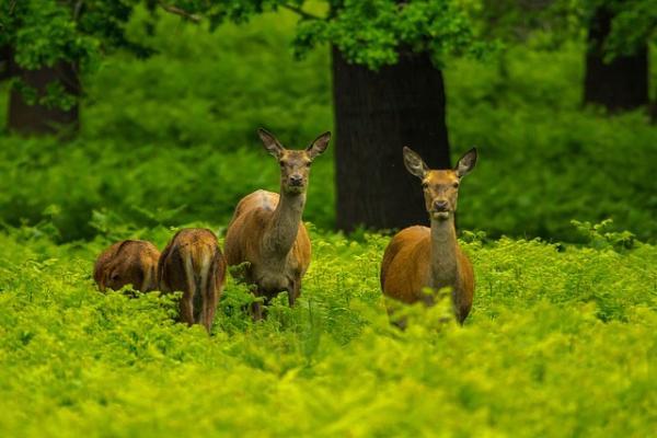 Diferencias entre animales acuáticos y terrestres - Características principales de los animales terrestres
