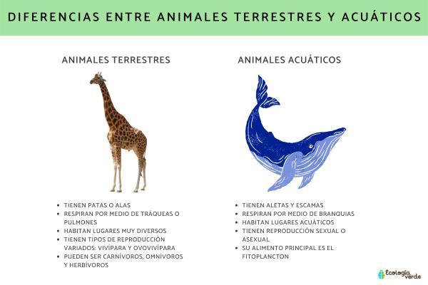 Diferencias entre animales acuáticos y terrestres