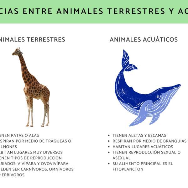 Diferencias Entre Animales Acuáticos Y Terrestres Explicación Sencilla