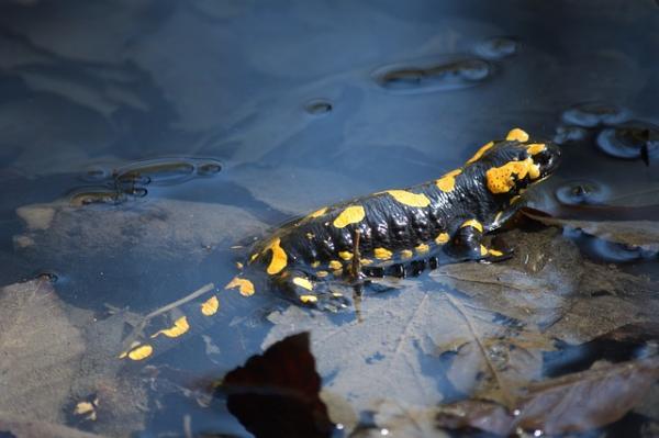 Diferencias entre animales acuáticos y terrestres - Un origen común entre los animales acuáticos y terrestres