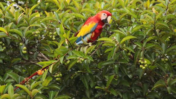 Selva Lacandona: flora y fauna - Selva Lacandona: animales en peligro de extinción