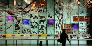 ¿Qué es la biodiversidad y cómo medirla?