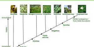 Origen y evolución de las plantas: resumen