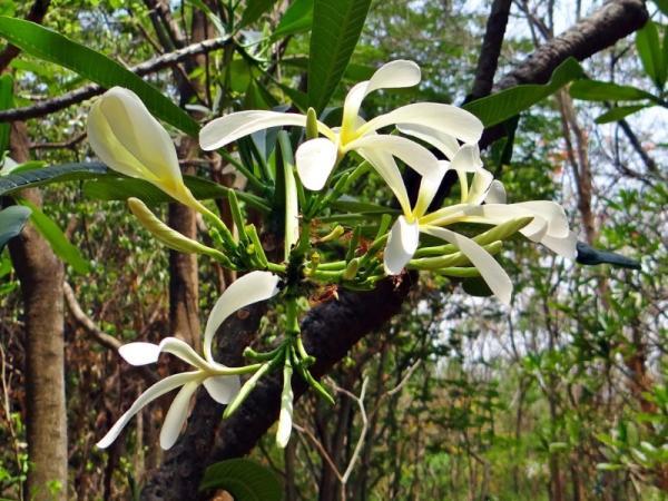 Plantas epífitas: qué son, tipos y ejemplos - Diferencia entre plantas epífitas y plantas parásitas
