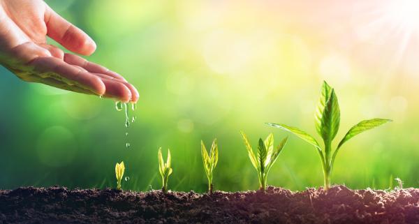 Por qué las plantas son seres vivos - ¿Las plantas son seres vivos?