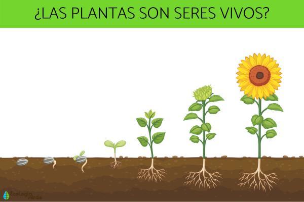 Por qué las plantas son seres vivos