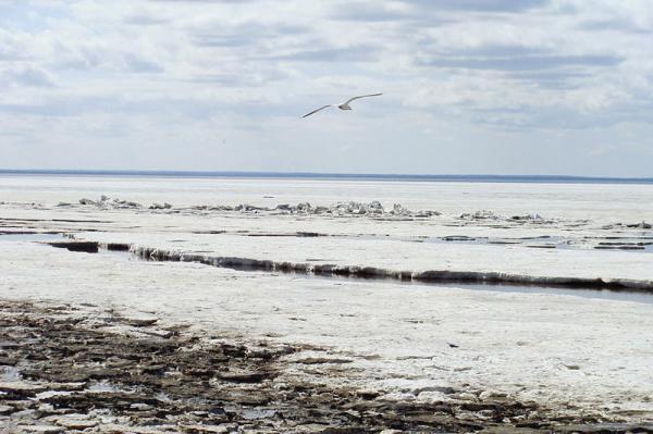 Por qué el Mar Blanco se llama así - Por qué se llama mar blanco y dónde está situado
