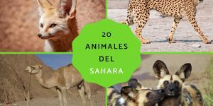 Animales del desierto del Sáhara