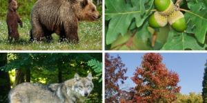 Bosque mixto: características, flora y fauna