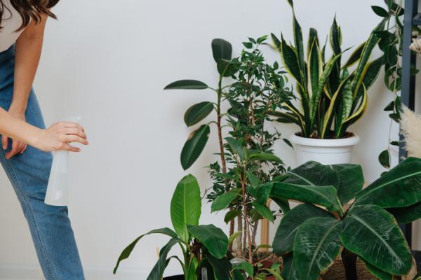 Plantas verdes de interior