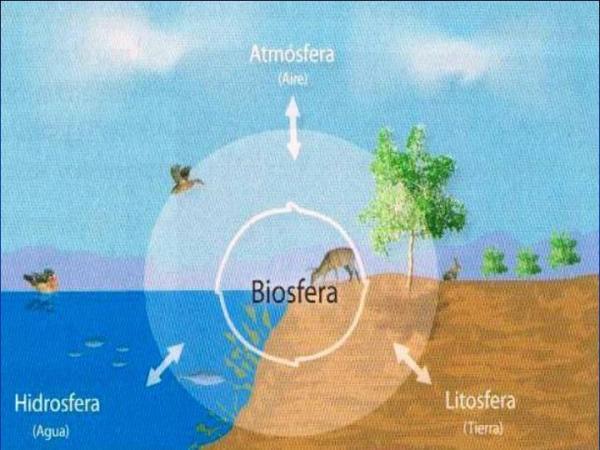 Qué es la biosfera: capas y características - Capas de la biosfera