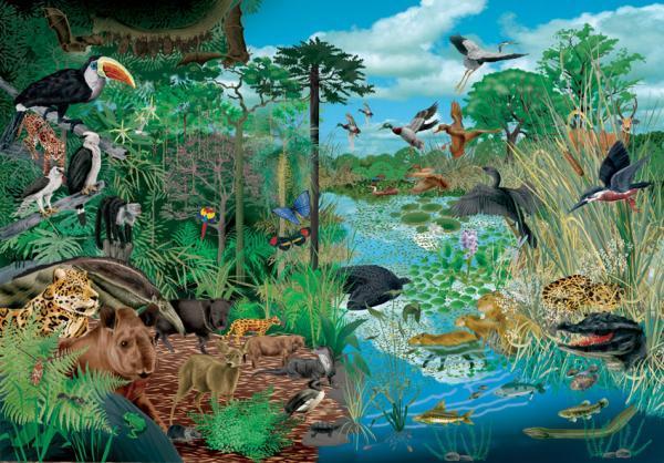 Qué es la biosfera: capas y características - Niveles de la biosfera - sus componentes