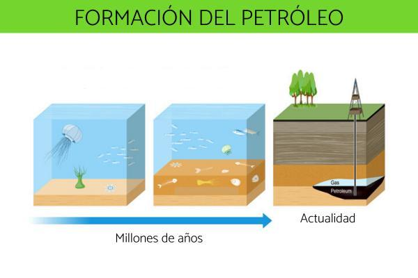 ¿El petróleo es un recurso renovable? - Cómo se forma el petróleo