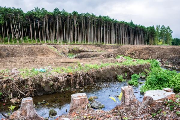 Principales problemas ambientales en el Perú - Deforestación en el Perú
