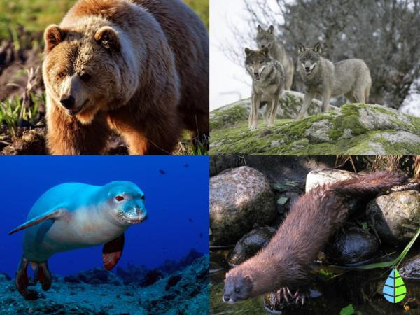 Animales en peligro de extinción en Europa - Mamíferos en peligro de extinción en Europa