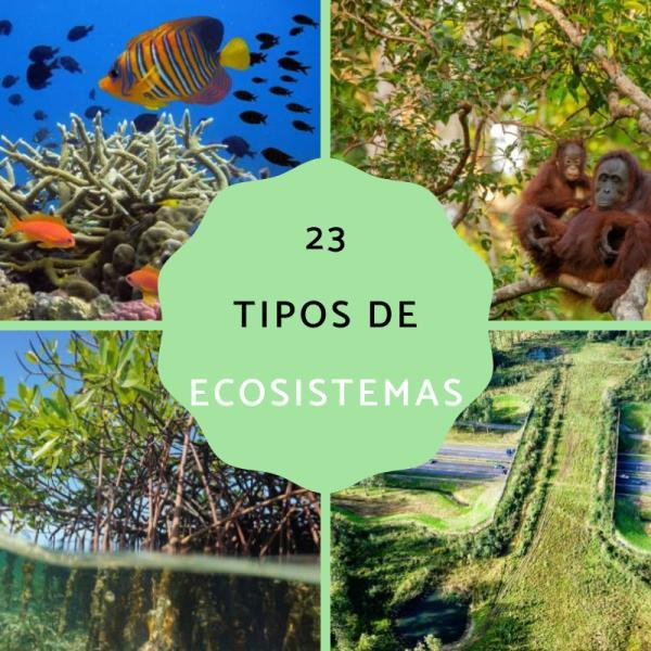 23 Tipos De Ecosistemas Clasificación Y Ejemplos