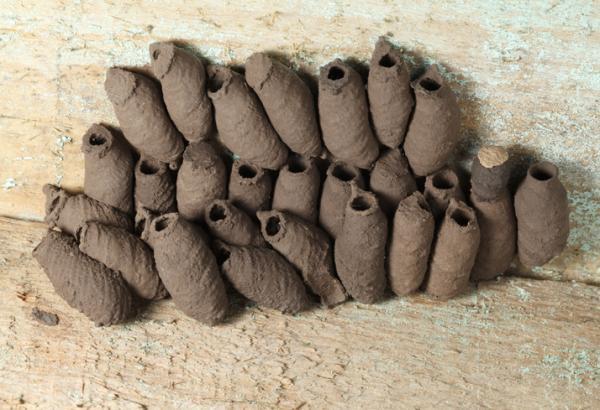 Avispa alfarera: cómo es, nido y picadura - Cómo es el nido de la avispa alfarera