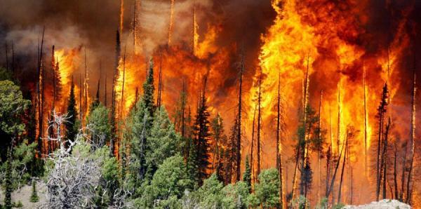 Causas de la deforestación en España - Causas naturales de la deforestación en España