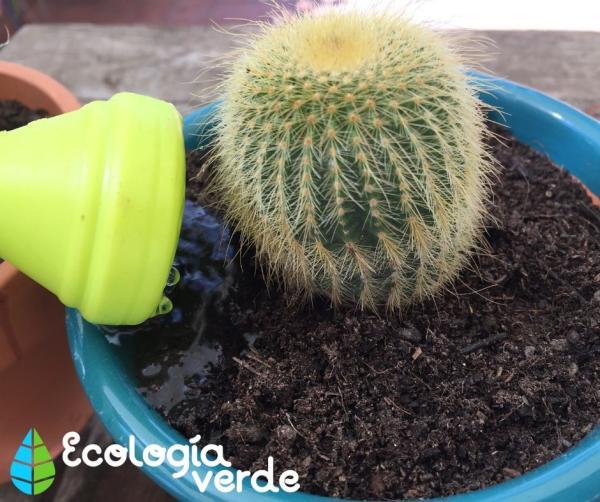 Regar los cactus: cada cuánto y cómo hacerlo - Cómo regar los cactus - consejos