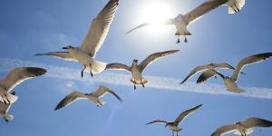 Animales aéreos: tipos y nombres