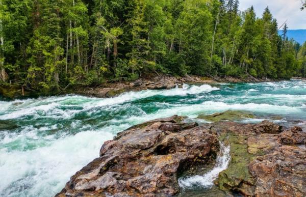 Ecosistemas acuáticos de agua dulce: ejemplos - Ecosistemas de agua dulce: ejemplo de sistemas lóticos o ríos