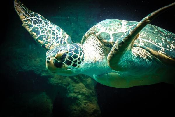 +20 animales con caparazón - El caparazón de las tortugas