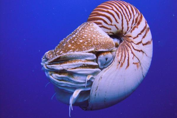 +20 animales con caparazón - El caparazón o concha de los moluscos