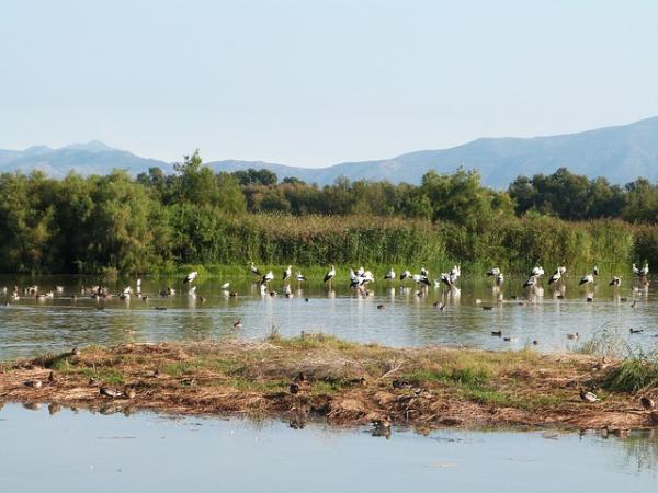 Ecosistemas acuáticos de agua dulce: ejemplos - Humedales y estuarios, grandes ecosistemas acuáticos de agua dulce