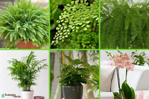 Plantas que absorben la humedad - Otras plantas que absorben la humedad