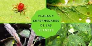 Plagas y enfermedades de las plantas: listas y cómo eliminarlas