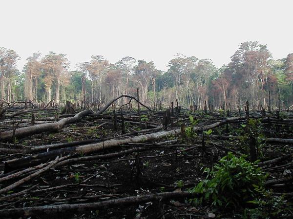 Problemas medioambientales y soluciones - Deforestación