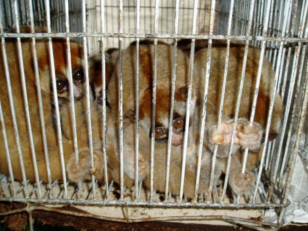 Problemas medioambientales y soluciones - Tráfico de especies ilegales