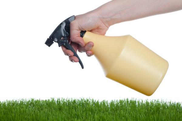 Cómo hacer insecticidas naturales para plantas