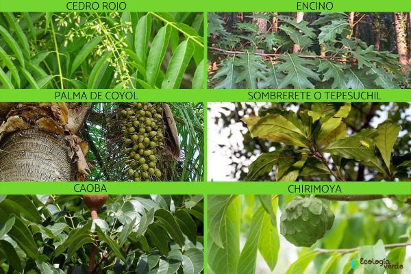 Flora y fauna de Chiapas - Flora de Chiapas