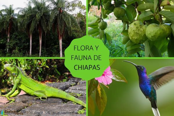 Flora y fauna de Chiapas