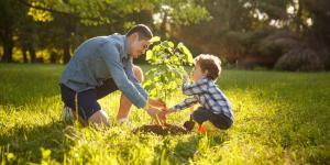 Cómo podemos ayudar a cuidar los árboles