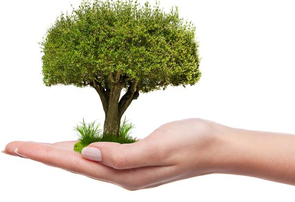 Cómo podemos ayudar a cuidar los árboles - Cómo podemos ayudar a cuidar los árboles a nivel particular