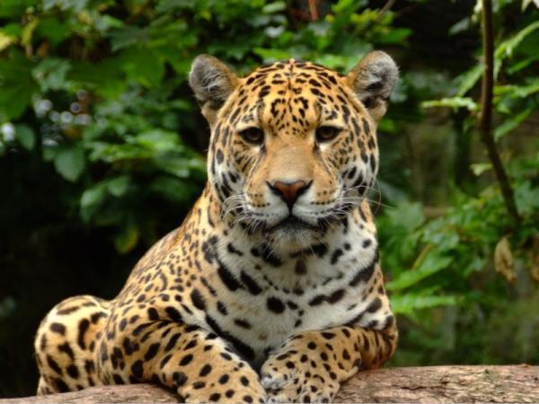 Flora y fauna de la selva tropical para niños - Fauna de la selva tropical