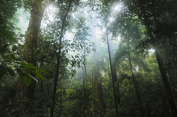Flora y fauna de la selva tropical para niños