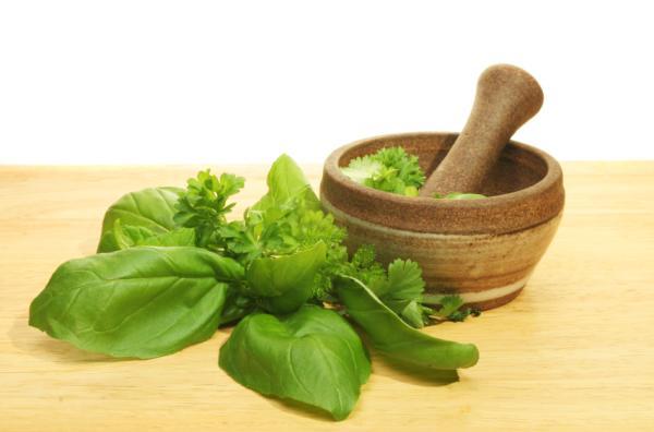 50 plantas medicinales mexicanas y para qué sirven - Propiedades y usos medicinales de la albahaca (Ocimum basilicum)